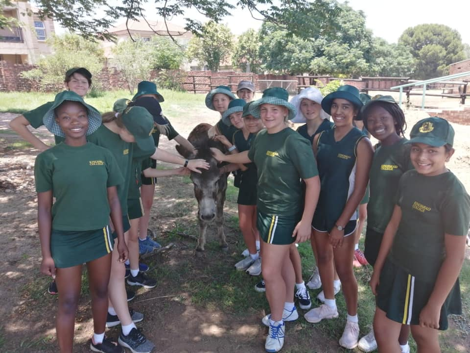 Society for Animals in Distress Kingsmead College November